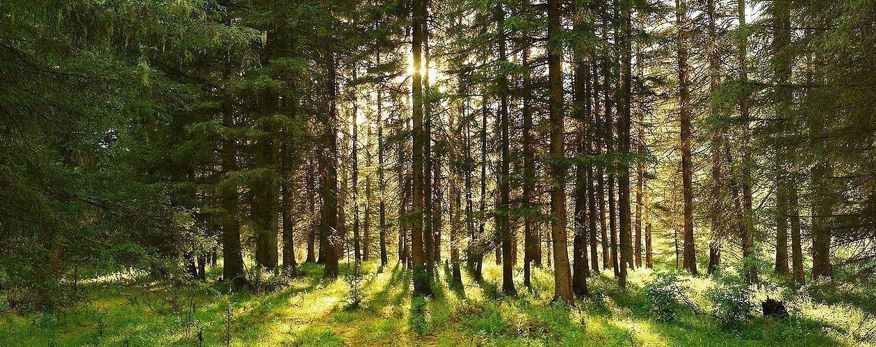 Bäume im Wald in Kaprun